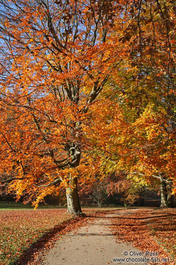 Autumn-trees3